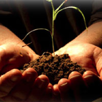 Sembrar semillas para el futuro