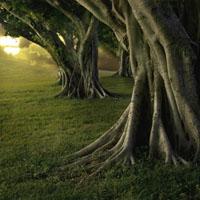 Retorno a las raíces
