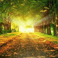 Libre para trazar nuevos caminos
