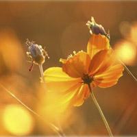 Como una flor al calor del Sol