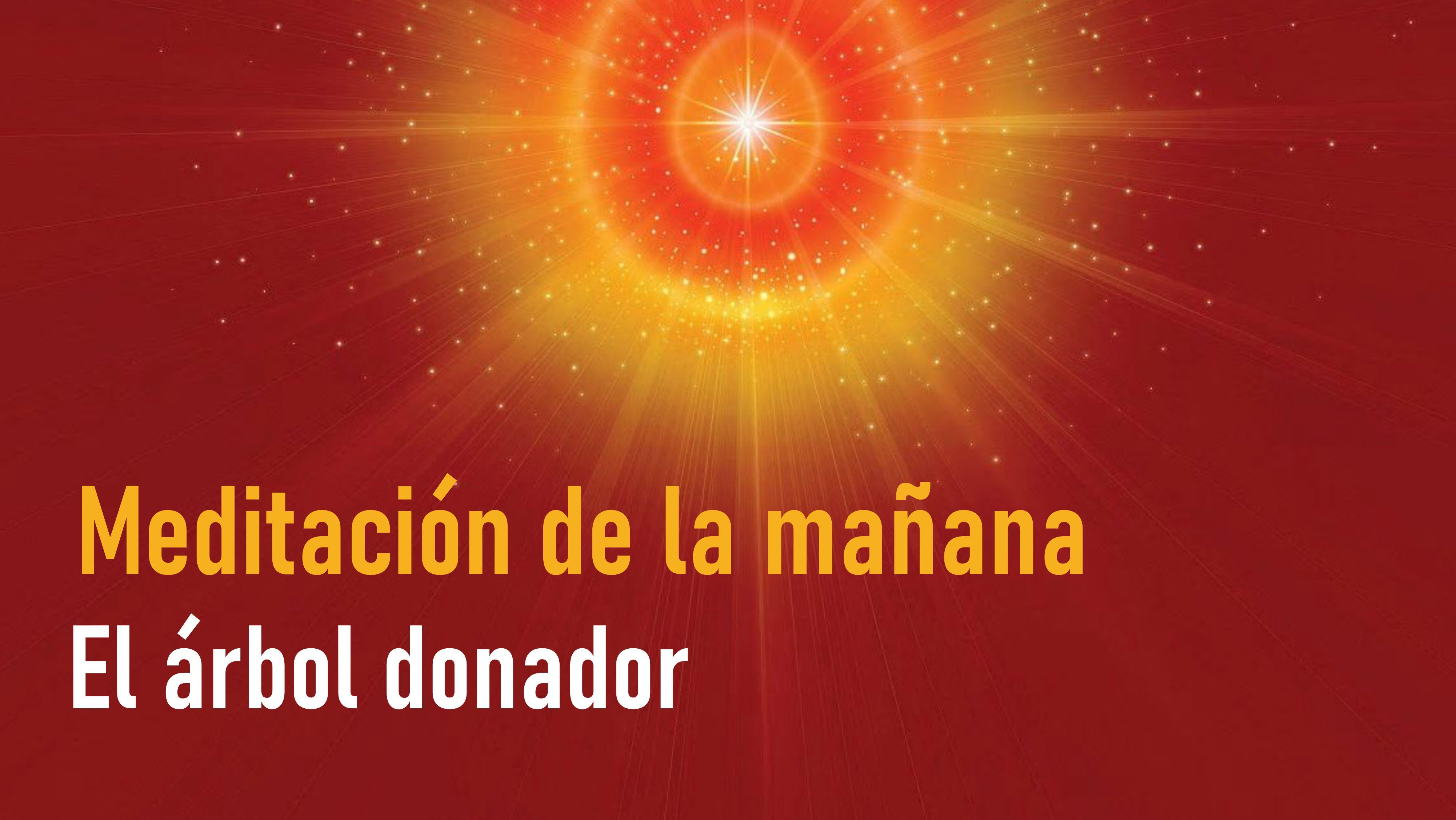 Meditación de la Mañana: El árbol donador de la vida (25 Junio 2020)